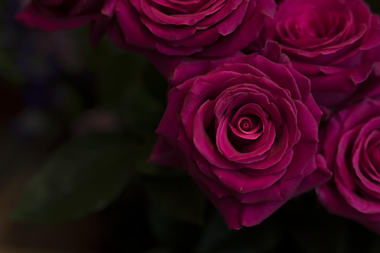Blumenladen an der Münchner Freiheit - Sonntags geöffnet